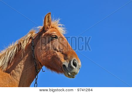Head of a horse close up.