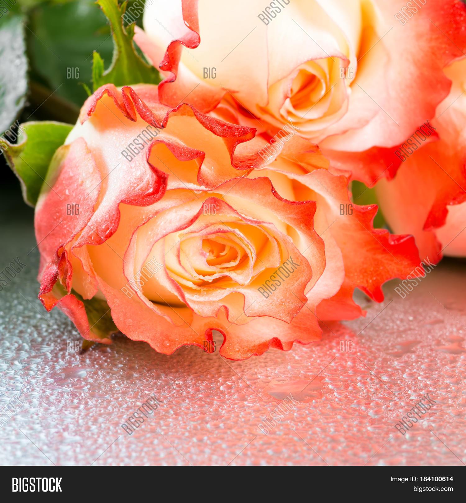 Beautiful Rose Flowers Image Photo Free Trial Bigstock