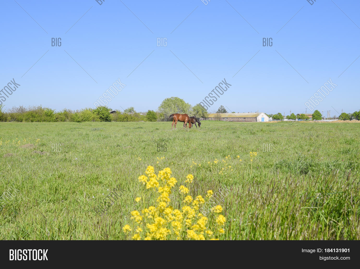 Horses On Grass Image Photo Free Trial Bigstock