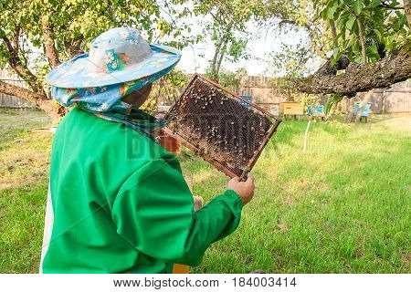 Beekeeper Checking A Beehive To Ensure Health Of The Bee Colony.