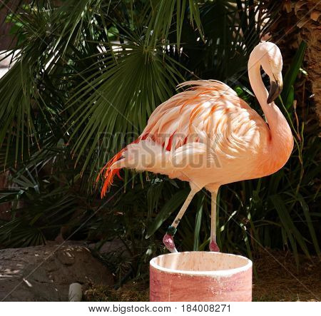 Flamingo standing infront of some palm leaves