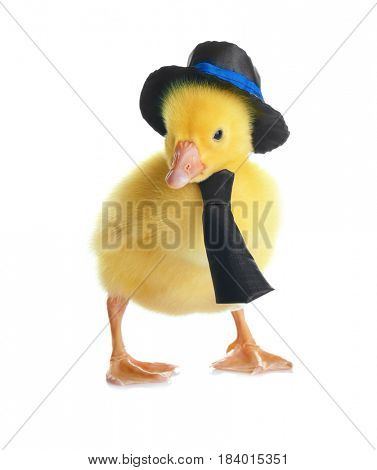 Cute funny gosling wearing necktie and hat on white background
