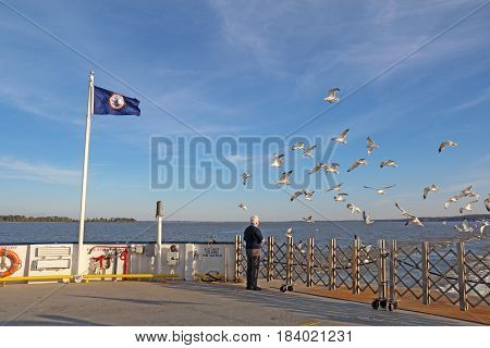 SCOTLAND VIRGINIA - FEBRUARY 20 2017: Man feeding ring-billed seagulls from the aft deck of the Jamestown-Scotland Ferry boat Pocahontas. This historic car ferry has been in operation since 1925.