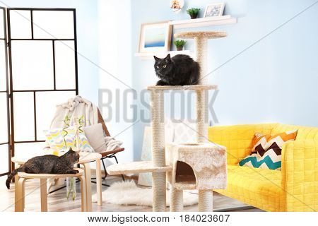 Cute cats and cat tree in modern room