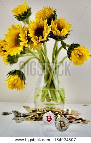 Silver Bitcoin And Yellow Sunflower