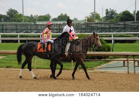 horse and rider being led to the starting gate at Churchill Downs, May 27th, 2016