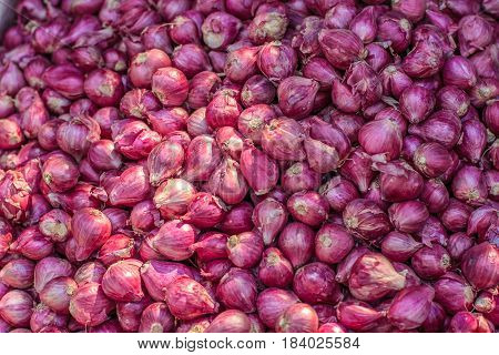 Pile of many fresh organic shallot onoins in the farmers market for sale from field for background. Close up