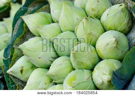 Bouquet of fresh green lotus buds with rain drops background at flower market, Bangkok, Thailand