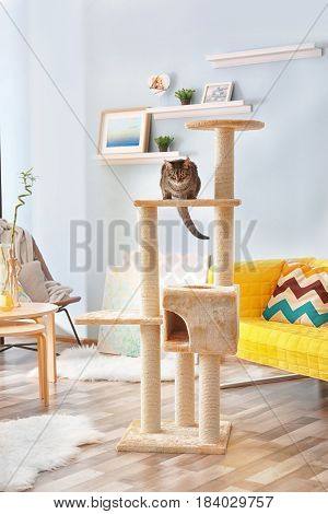 Cute cat sitting on tree in modern room