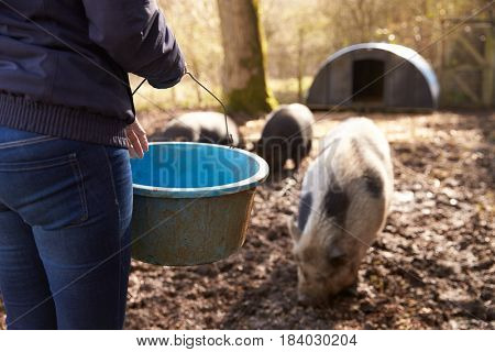 Woman Feeding Pigs, Mid-section crop