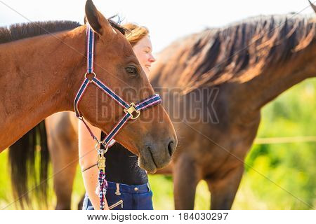 Jockey Young Girl Petting Brown Horse