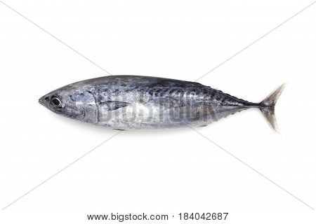 Fresh tuna fish isolated on a white background.