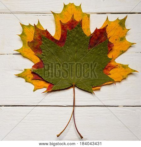 Three Autumn Maple Leaves On White Wooden Background