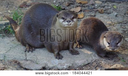 Otter and pup pose for the camera.