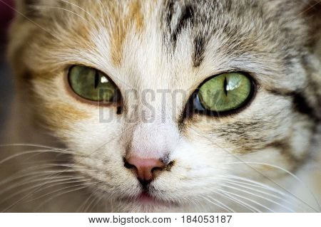 Cat pictures, most beautiful cat looks, most beautiful cat eyes, postcard, cat head and eyes