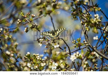 The arrival of spring, the awakening of nature and the start of butterflies fly, the spring view,