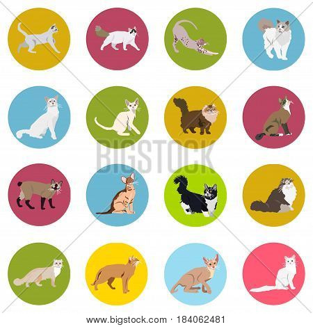 Cats of different breeds. Icons. Vector image in a flat style. Illustration on a round background. Element of design, interface.