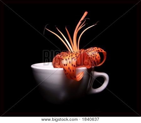 Single Tiger Lily In A White Porcelain Cup