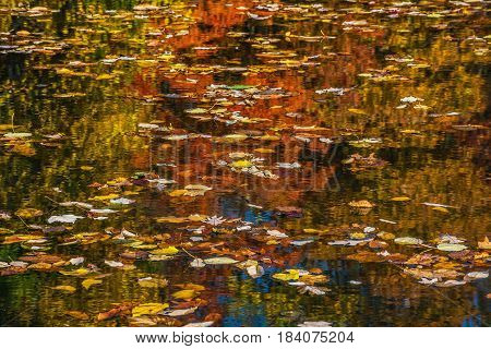 Colorful Autumn leaves and Fall reflections on this lake in Long Valley New Jersey.