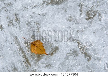 The yellow leaf of the birch froze in the ice of the lake.