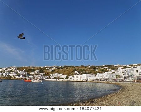 Mykonos Town Beachfront under Vivid Blue Sky with a Flying Pigeon, Mykonos island of Greece