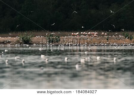 Group Of Flamingos Standing On Sandbank In Lake.