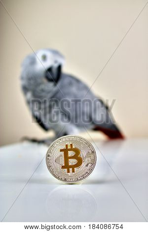 African Grey Parrot And Bitcoin Coin
