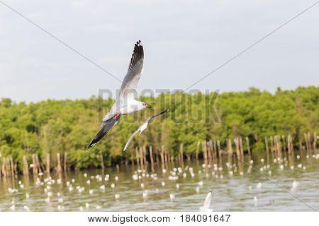 Seagulls are flying over the coast of Bangpoo Samutprakarn province Thailand