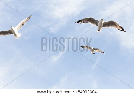 Seagulls flying over sky with cloudy background