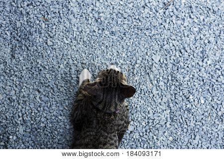 Cat animal kitten kitty meow