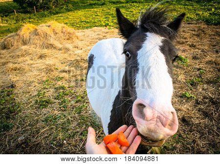 Feeding friendly farm horse friend on a Friday  :)