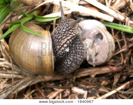 two snails meiting on the ground near grass poster