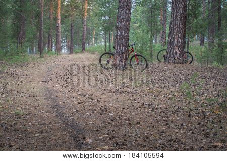 Mountain bikes parked in the woods on a trail at sunrise background. Walking footpath or biking path.