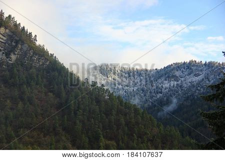 morning in the mountains, two levels of the mountains, near a range of coniferous fir trees, on the distant mountain trees covered snow, gentle morning sky