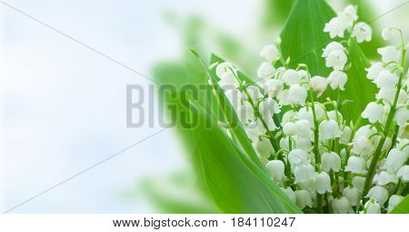 lilly of the valley flowers on blue bokeh background banner