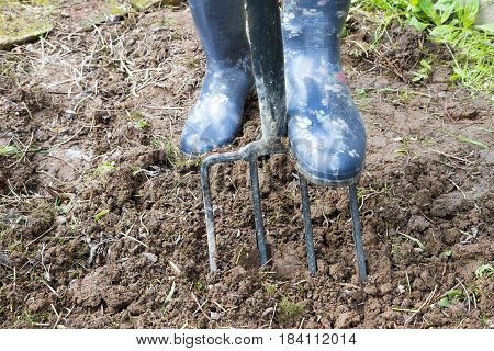 Gardener digging in dirty soil with garden fork wearing in rubber boots