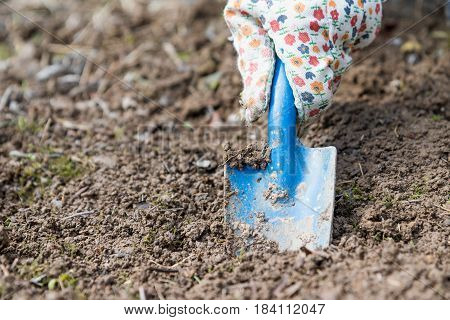 Gardener is digging the hole in the dirty soil with a blue garden blade closeup