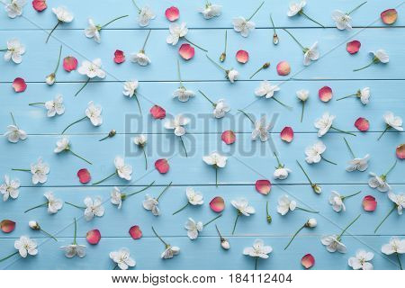 Pattern of white cherry blossom flowers and red rose petals. Floral decoration on a blue wooden background. Flat layout, top view