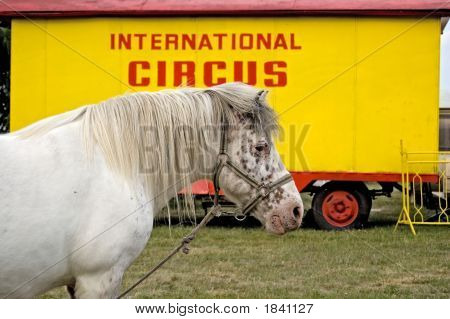 International Circus Horse