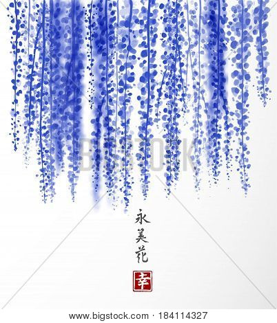 Wisteria hand drawn with ink on white background. Traditional oriental ink painting sumi-e, u-sin, go-hua. Contains hieroglyph - happiness, eternity, beauty, flower. Bunches of flowers.