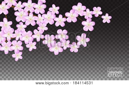 Pink sakura flowers petals. Blooming cherry on transparent background. Wallpaper wedding invitations greeting cards for spring sale holidays birthday. Vector illustration.