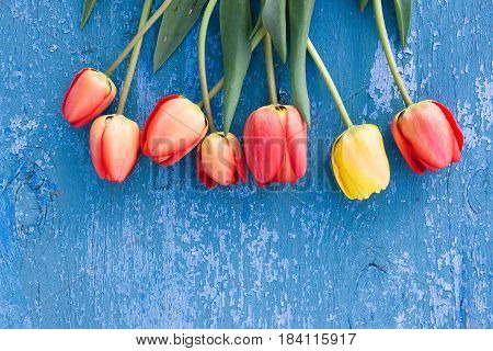 Wooden Blue Background And Red Tulips. Beautiful Flowers On Blue Antique Texture. Feast Of The Conce