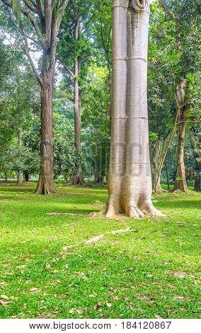 Baobab In Kandy