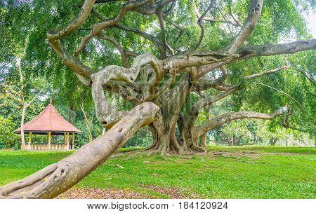 The Twisted Roots