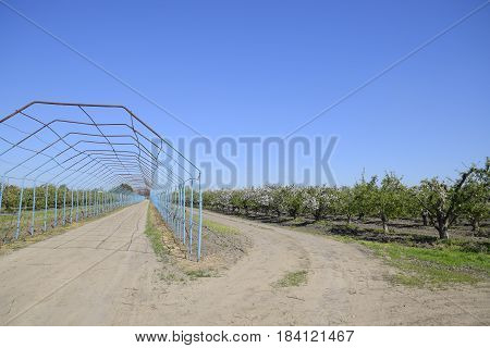 Steel Gazebo For Grapes Over The Road In The Apple Orchard. Fruit Garden