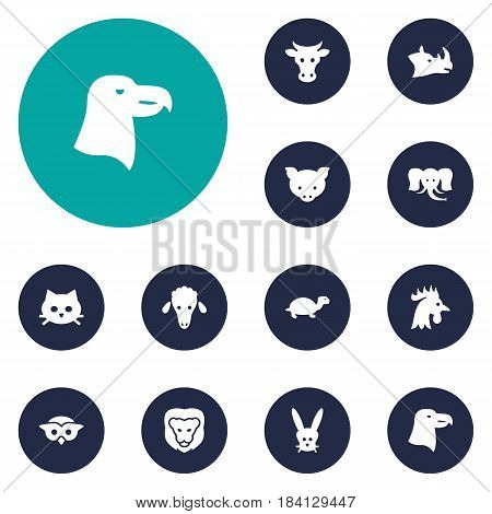 Set Of 12 Alive Icons Set.Collection Of Trunked Animal, Tortoise, Kine And Other Elements.
