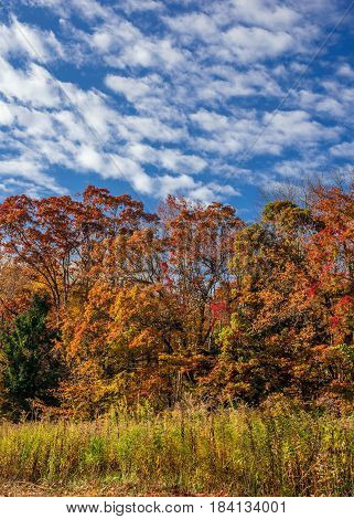 A cloudy blue sky with multicolored leaves in this field in Schoolys Mountain Park in Morris County New Jersey.
