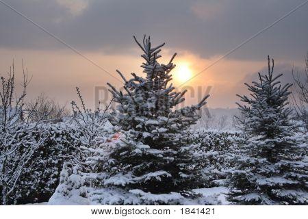 Sun On Winter Morning