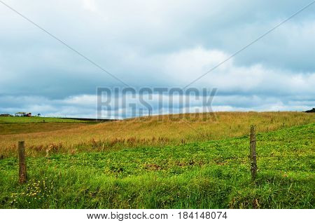 Beautifull contrastant land scape of some  hectares of grass and cereals