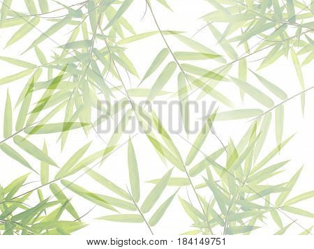 Green bamboo leaves in nature forest background.